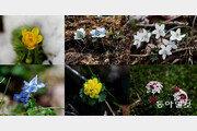오름마다 특색있는 '들꽃의 향연'에 관광객들 탄성