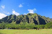 내년 출발 해외 항공권 1위 하와이…코로나 이후 '안전한 휴양지' 선호