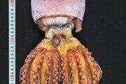 청정 남해바다가 키운 자연산 돌미역-톳