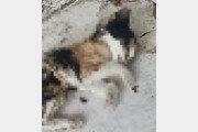 올림픽공원 고양이 잔혹 떼죽음…입건도 못한채 종결