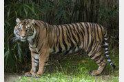 美워싱턴 국립동물원 사자·호랑이 9마리 코로나19 감염