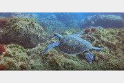 '멸종위기' 푸른바다거북의 남해 나들이