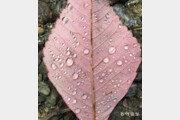 [고양이 눈]물방울에 담긴 가을