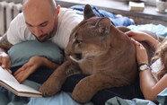 """아파트에서 푸마 키우는 러시아 커플 """"강아지나 마찬가지"""""""