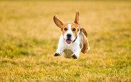 보호자 귀가하면 펄쩍펄쩍 뛰는 강아지, 어떻게 하죠?