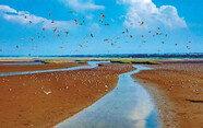지구 순례하는 철새들의 지상낙원…생태계의 보고, 화성 습지
