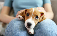 너무 어린 강아지, 사회화 어떻게 시켜야 하죠?