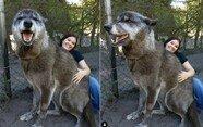 """""""강아지라고 해서 키웠는데 거대한 늑대였어요"""""""
