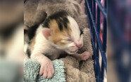 5마리 새끼 고양이 구하려고 벽 뜯은 소방관들