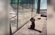 '자유를 향한 갈망' 돌로 유리창 깬 원숭이