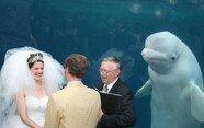 결혼식 하객으로 참석한 '돌고래'는 처음 보시죠?