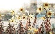 정류장에 꽃이 가득…폴란드 도심 속 특별한 풍경