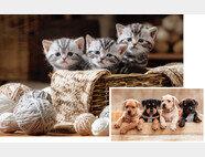 개나 고양이의 진료비는 가축에 비해 상당히 비싸다. [shutterstock]