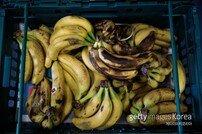 1억 바나나 먹어치운 행위예술가…갤러리 입장은