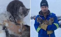 눈밭에 얼어붙은 고양이들 따뜻한 '커피' 부어 구조