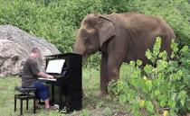 """""""미안해, 코끼리야"""", 눈 먼 코끼리에게 들려주는 피아노 연주"""