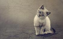 일본인들이 집 나간 고양이를 찾는 기묘한 방법…진짜야?