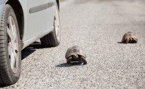 거북이의 세상을 구한 히어로, 버스 기사