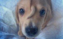이마에 '뿔' 달린 유니콘 강아지의 사연