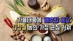 가을태풍에 '배춧값 금값'...김장철 농민·가정 근심 커져