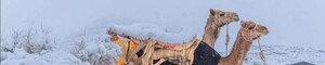 온난화의 역설…사막 폭설 화들짝, 북극 한파 오들오들