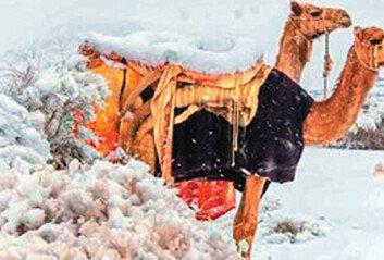 온난화의 역설… 사막 폭설 화들짝,북극 한파 내려와 오들오들