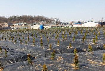 LH직원들 광명-시흥 땅 매입 시작 시점부터 일대 거래량 급증