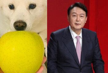 """尹, 하루만에 또 '개 사과' 파문""""내가 승인"""" 사과"""