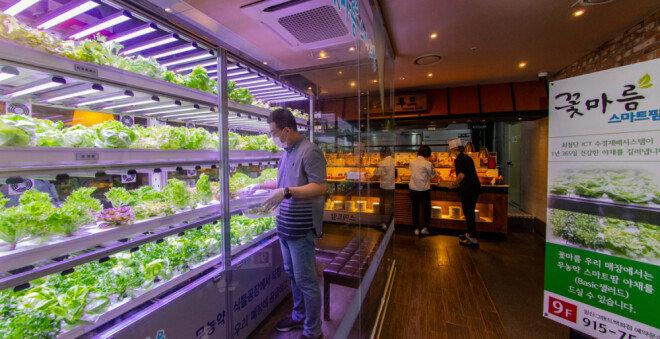 스마트팜에서 재배한 채소를 식재료로 사용하는 경기 고양시 꽃마름 식당.