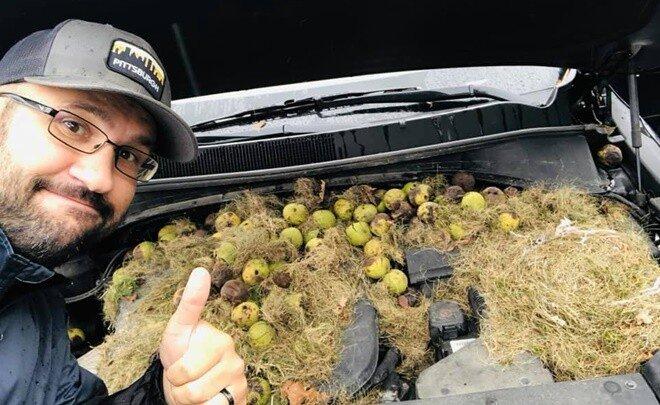 내 차에서 우연히 다람쥐들의 '보물창고'를 발견했다