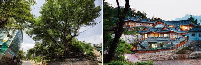 수령이 350년이나 된다는 흥천사 앞길의 느티나무와 그 이름을 따서 지은 어린이집의 초저녁 풍경. [박영채]