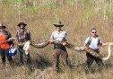 73개 알 품은 비단뱀 발견…5m 길이에 초대형 몸집