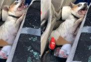 50도 차량 안에 반려견 방치한 견주…창문 깼다고 '버럭'