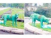온 몸이 녹색 페인트로 칠해진 개 발견, '왜 이러나'