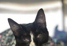 """세탁기에 30분간 갇힌 고양이…""""다친 데 없어 다행"""""""