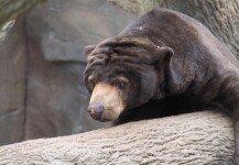 불법으로 야생곰 사육한 가수…신고로 적발→체포