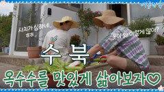 사치가 심한(?) 잘 익은 옥수수들! 맛있게 삶아보자♡ | tvN 200925 방송