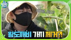 유해식물 왕도깨비 가지 제거하러간 절친들 ☞ 300평을 다 하라고요? | tvN 201220 방송