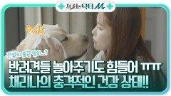 반려견들 놀아주기도 힘들어 ㅠㅠ 전설의 댄싱 머신 채리나의 충격적인 건강 상태! | tvN STORY 210927 방송