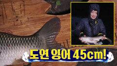 ★장거인 슬램덩크 작렬★ 범상치 않게 휘는 초릿대... 잉어 힛-트!