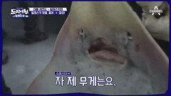 [스페셜] 도시어부 대물 레전드 '알래스카편'