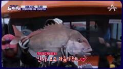 [스페셜] 도시어부 대물 레전드 '국내편'
