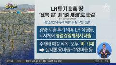 LH 투기 의혹 땅…'묘목 밭'이 '벼 재배'로 둔갑