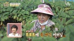 인삼밭에 울려 퍼지는 구성진 트로트 가락? 정동원 찐팬인 김경애 어머님