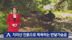 '진흙 목욕' 반달가슴곰, '털 손질' 수달…지리산의 일상