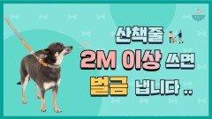 '리드줄 2m 이상 제한' 내년부터 시행되는 강아지 법률