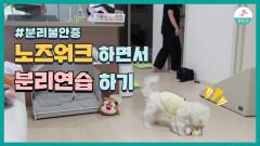 강아지 분리불안증 예방하는ㅣ두가지 훈련방법 [2편]
