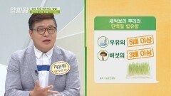 간세포 생성의 필수 요소 단백질이 풍부한 '새싹보리🌱 뿌리'   JTBC 210610 방송