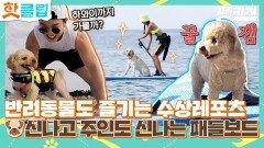 핫클립 물아일견 댕댕이들이 더 신난 시원한 패들보드 반려견과 함께 즐기는 수상레포츠 JTBC 210923 방송