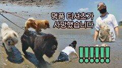 갯벌에서 곰댕이(?) 세 마리에게 끌려다니는 학래, 결국 철퍼덕 | JTBC 210829 방송